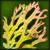 Ядовитые водоросли